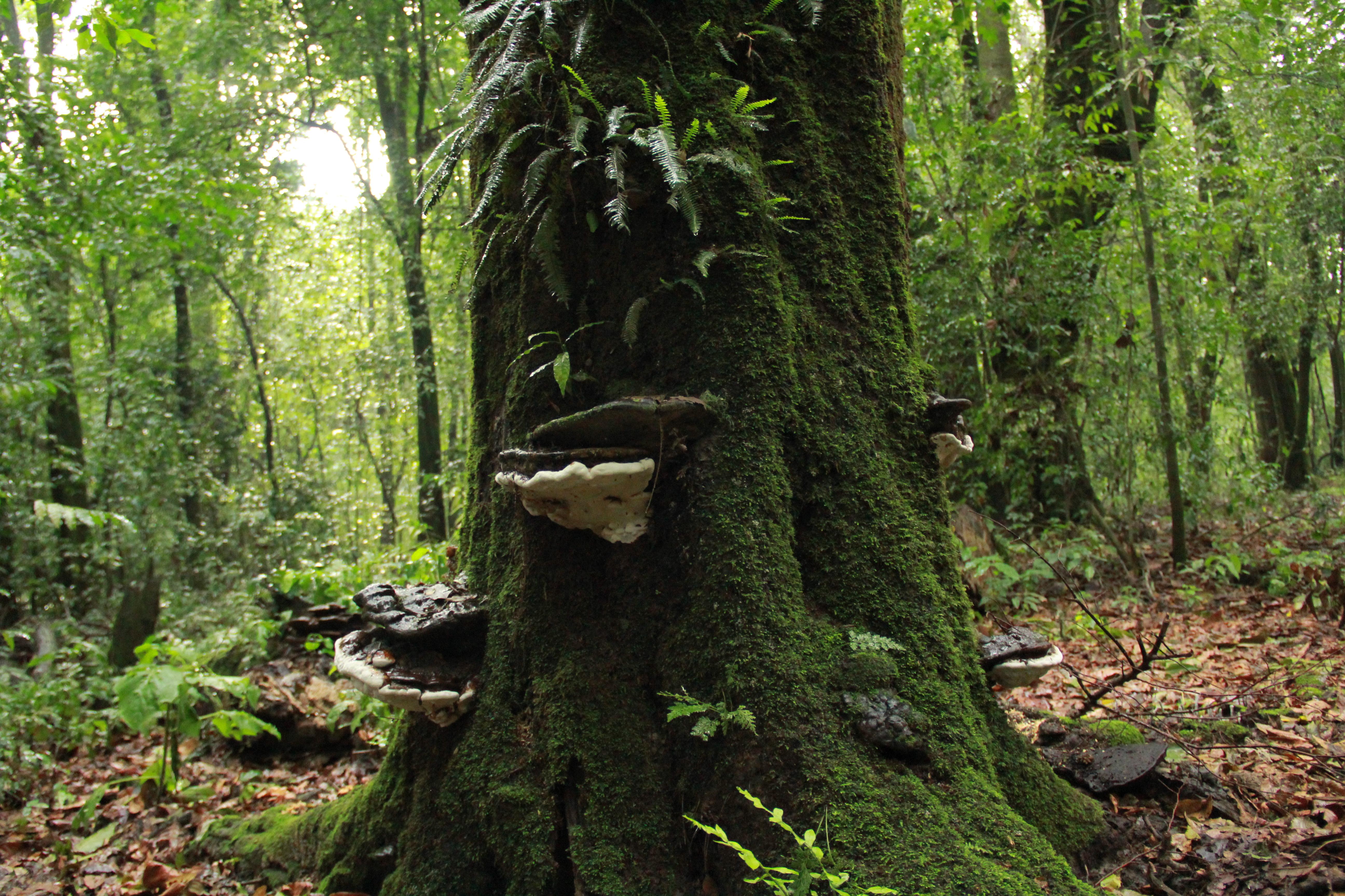 el parque estatal bosque mes u00f3filo nevado de colima